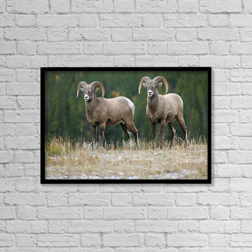 "Printscapes Wall Art: 18"" x 12"" Canvas Print With Black Frame - Animals by Darwin Wiggett"