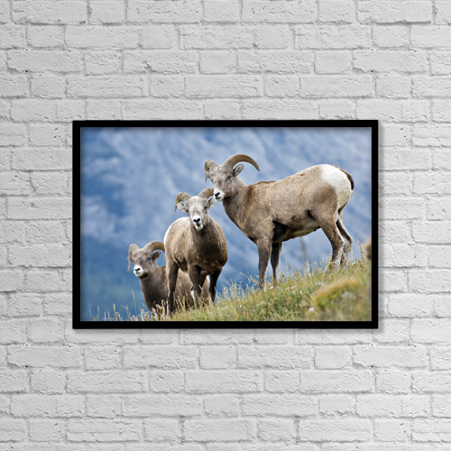 """Printscapes Wall Art: 18"""" x 12"""" Canvas Print With Black Frame - Animals by Darwin Wiggett"""
