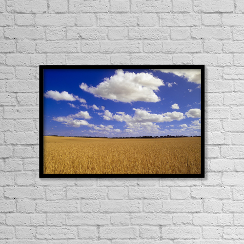 "Printscapes Wall Art: 18"" x 12"" Canvas Print With Black Frame - Spring Wheat Field, Tiger Hills, Manitoba by Dave Reede"