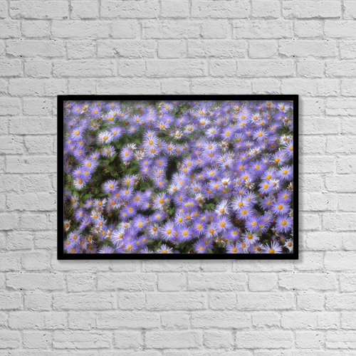 "Printscapes Wall Art: 18"" x 12"" Canvas Print With Black Frame - Compositae Flowers, Calgary Zoo, Alberta by Darwin Wiggett"