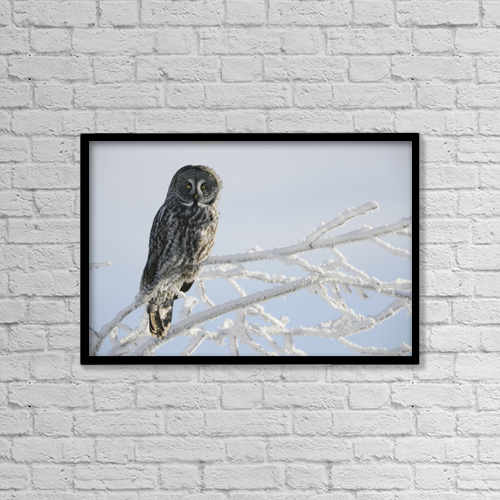 "Printscapes Wall Art: 18"" x 12"" Canvas Print With Black Frame - Great Grey Owl, Northern British Columbia by Robert Postma"