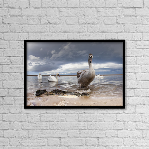 "Printscapes Wall Art: 18"" x 12"" Canvas Print With Black Frame - Animals by John Short"