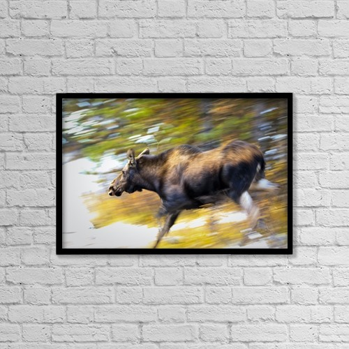 "Printscapes Wall Art: 18"" x 12"" Canvas Print With Black Frame - Animals by Ken Gillespie"
