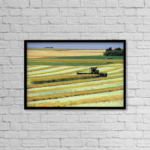 "Printscapes Wall Art: 18"" x 12"" Canvas Print With Black Frame - Swathing Canola, Tiger Hills, Manitoba by Dave Reede"
