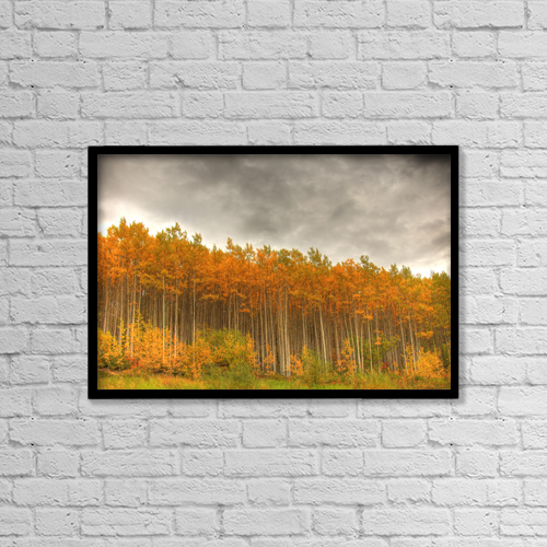 "Printscapes Wall Art: 18"" x 12"" Canvas Print With Black Frame - Poplar Forest In Autumn, Teslin, Yukon by Robert Postma"