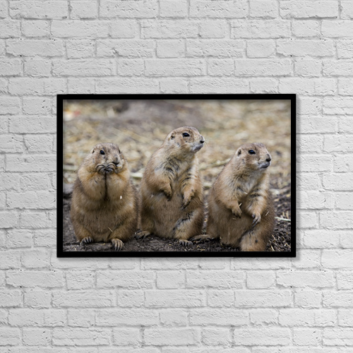 "Printscapes Wall Art: 18"" x 12"" Canvas Print With Black Frame - Animals by Chad Coombs"