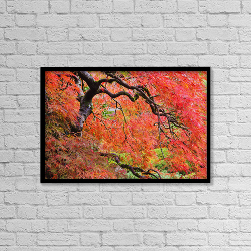 "Printscapes Wall Art: 18"" x 12"" Canvas Print With Black Frame - Autumn Colours At The Japanese Gardens by Craig Tuttle"