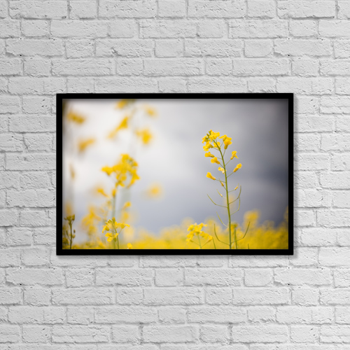 "Printscapes Wall Art: 18"" x 12"" Canvas Print With Black Frame - Detail Of Flowering Canola by Katy Huisman"