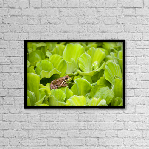 "Printscapes Wall Art: 18"" x 12"" Canvas Print With Black Frame - Leopard Frog Perching On Water Lettuce by Mary Ellen McQuay"