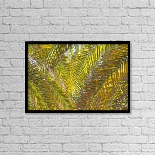 "Printscapes Wall Art: 18"" x 12"" Canvas Print With Black Frame - Backlit Palm Leaves; Mendoza, Argentina by Philippe Widling"