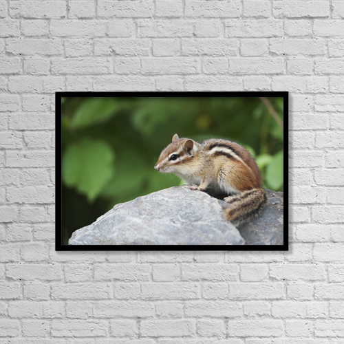 "Printscapes Wall Art: 18"" x 12"" Canvas Print With Black Frame - Animals by Amy Kay"