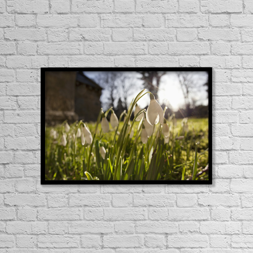 "Printscapes Wall Art: 18"" x 12"" Canvas Print With Black Frame - Snowdrop Flowers In The Sunlight by John Short"