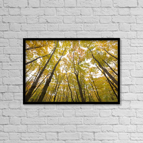 "Printscapes Wall Art: 18"" x 12"" Canvas Print With Black Frame - Fall Foliage On The Trees by Susan Dykstra"