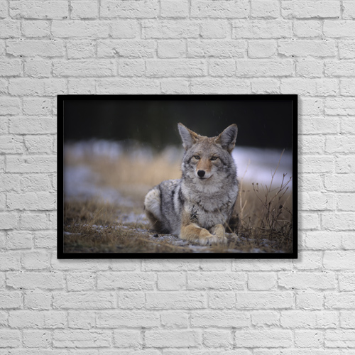 """Printscapes Wall Art: 18"""" x 12"""" Canvas Print With Black Frame - Animals by Leanna Rathkelly"""