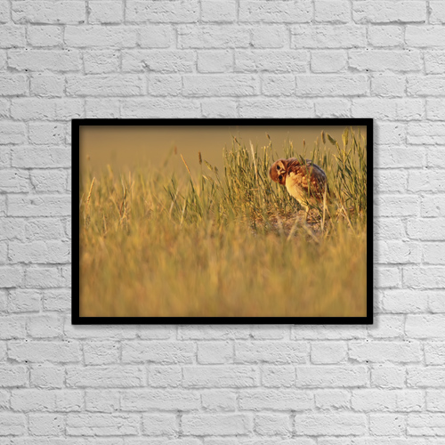 "Printscapes Wall Art: 18"" x 12"" Canvas Print With Black Frame - Animals by Robert Postma"