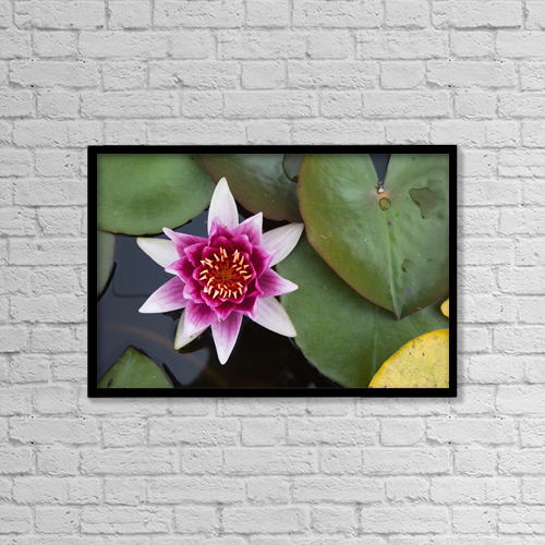 """Printscapes Wall Art: 18"""" x 12"""" Canvas Print With Black Frame - A Blooming Pink Lotus Flower by John Short"""