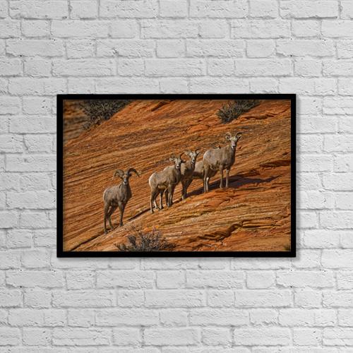 "Printscapes Wall Art: 18"" x 12"" Canvas Print With Black Frame - Bighorn Sheep, Zion National Park, Utah by Robert Postma"