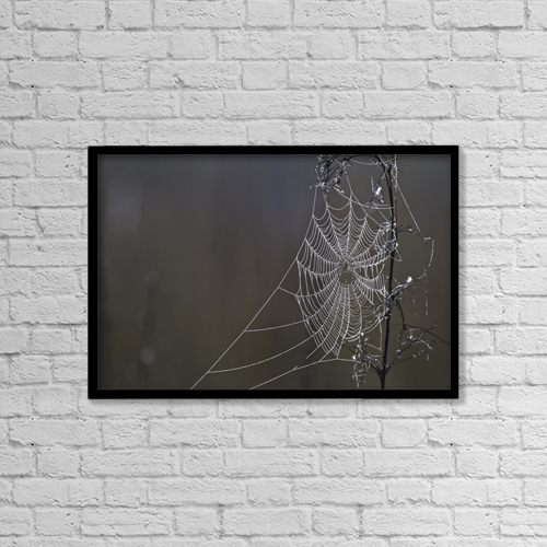 """Printscapes Wall Art: 18"""" x 12"""" Canvas Print With Black Frame - Spider Web Covered In Dew Drops, Florida by Robert Postma"""