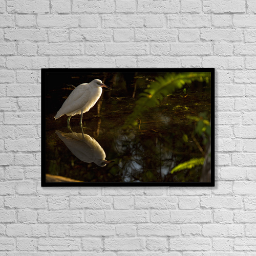 "Printscapes Wall Art: 18"" x 12"" Canvas Print With Black Frame - Snowy Egret, Florida by Robert Postma"