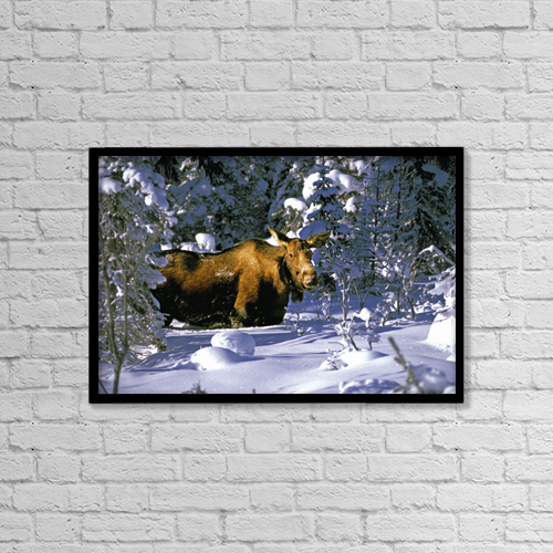 "Printscapes Wall Art: 18"" x 12"" Canvas Print With Black Frame - Animals by Bill Scott"