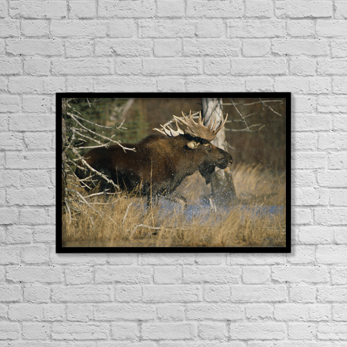 """Printscapes Wall Art: 18"""" x 12"""" Canvas Print With Black Frame - Animals by Doug Lindstrand"""