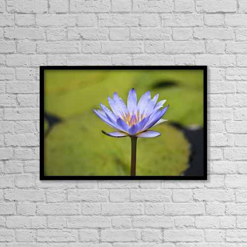 """Printscapes Wall Art: 18"""" x 12"""" Canvas Print With Black Frame - Close-Up Of Blue Water Lily by Ken Gillespie"""