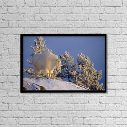"Printscapes Wall Art: 18"" x 12"" Canvas Print With Black Frame - Animals by Tom Soucek"