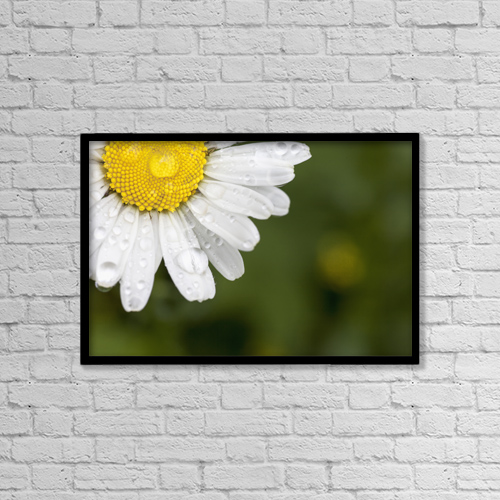 "Printscapes Wall Art: 18"" x 12"" Canvas Print With Black Frame - A white daisy with water drops by John Short"