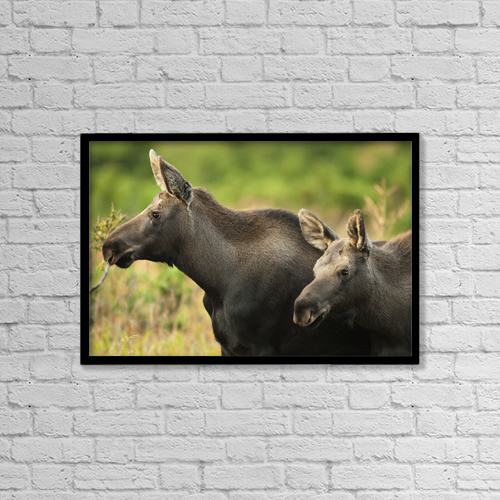 "Printscapes Wall Art: 18"" x 12"" Canvas Print With Black Frame - Animals by Carl Johnson"