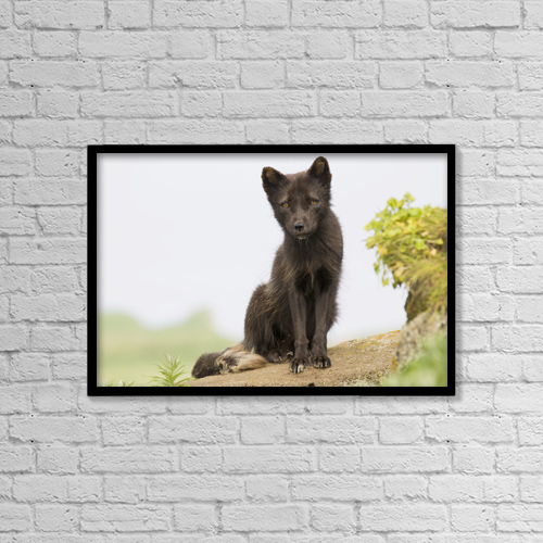 "Printscapes Wall Art: 18"" x 12"" Canvas Print With Black Frame - Animals by John Gibbens"