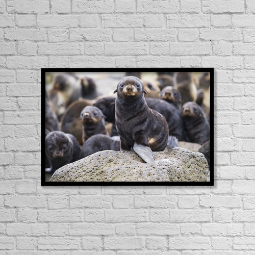 "Printscapes Wall Art: 18"" x 12"" Canvas Print With Black Frame - Portrait Of A Northern Fur Seal Pup, St by John Gibbens"