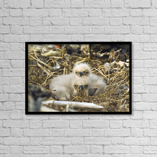 "Printscapes Wall Art: 18"" x 12"" Canvas Print With Black Frame - Lifestyle by Brian Guzzetti"