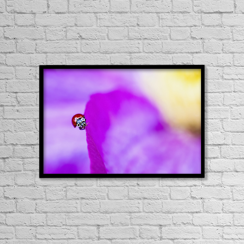 "Printscapes Wall Art: 18"" x 12"" Canvas Print With Black Frame - A ladybug on a pink clematis by Debra Brash"