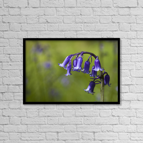 "Printscapes Wall Art: 18"" x 12"" Canvas Print With Black Frame - Bluebell (hyacinthoides) by John Short"