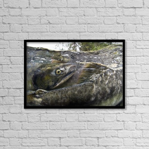 "Printscapes Wall Art: 18"" x 12"" Canvas Print With Black Frame - Animals by Thomas Kline"