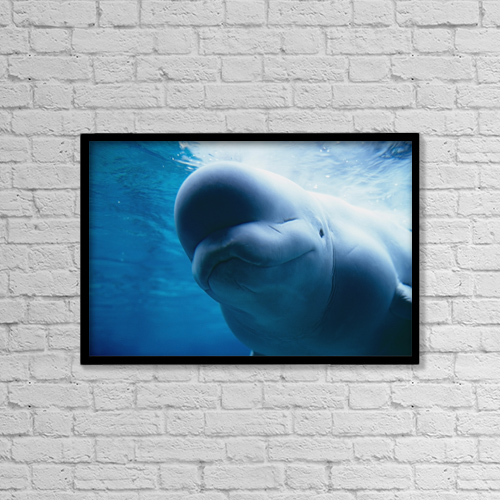 "Printscapes Wall Art: 18"" x 12"" Canvas Print With Black Frame - Animals by Mark Newman"