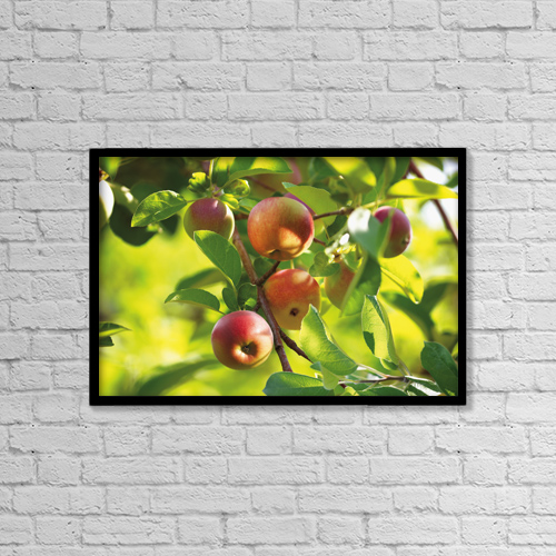 """Printscapes Wall Art: 18"""" x 12"""" Canvas Print With Black Frame - Detail Of Apple Tree by Bruno Crescia"""