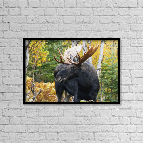 "Printscapes Wall Art: 18"" x 12"" Canvas Print With Black Frame - Animals by Philippe Henry"