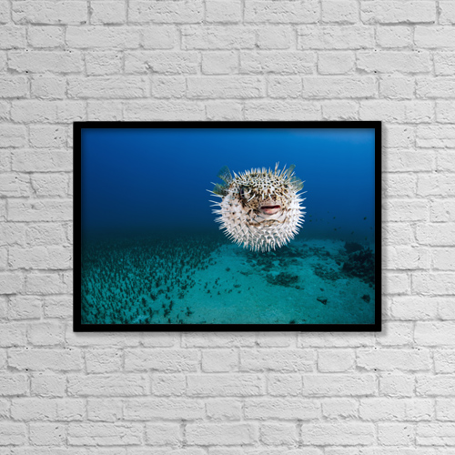 """Printscapes Wall Art: 18"""" x 12"""" Canvas Print With Black Frame - Animals by Dave Fleetham"""
