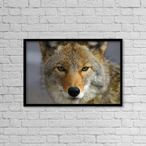 """Printscapes Wall Art: 18"""" x 12"""" Canvas Print With Black Frame - Animals by John Delapp"""