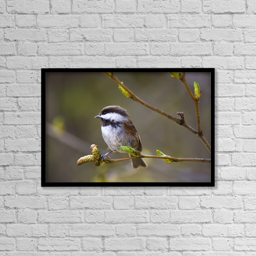 "Printscapes Wall Art: 18"" x 12"" Canvas Print With Black Frame - Animals by John Delapp"