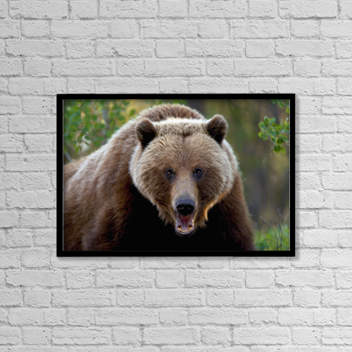 """Printscapes Wall Art: 18"""" x 12"""" Canvas Print With Black Frame - Animals by John Hyde"""
