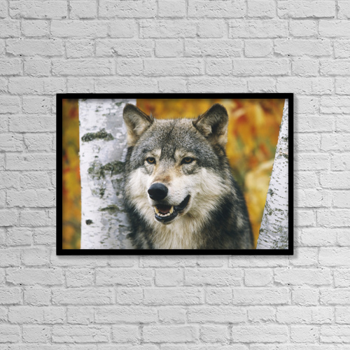"Printscapes Wall Art: 18"" x 12"" Canvas Print With Black Frame - Animals by Michael DeYoung"