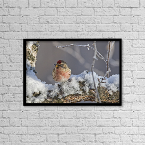 "Printscapes Wall Art: 18"" x 12"" Canvas Print With Black Frame - Animals by Ken Baehr"