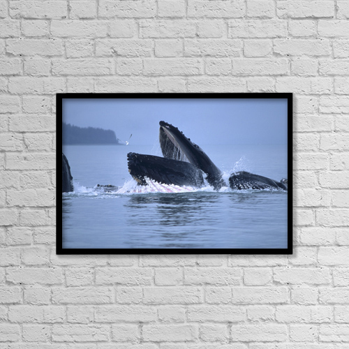 "Printscapes Wall Art: 18"" x 12"" Canvas Print With Black Frame - Animals by Mark Kelley"