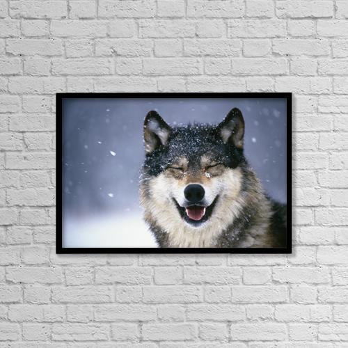 "Printscapes Wall Art: 18"" x 12"" Canvas Print With Black Frame - Wolf Portrait Captive Winter by Tom Soucek"