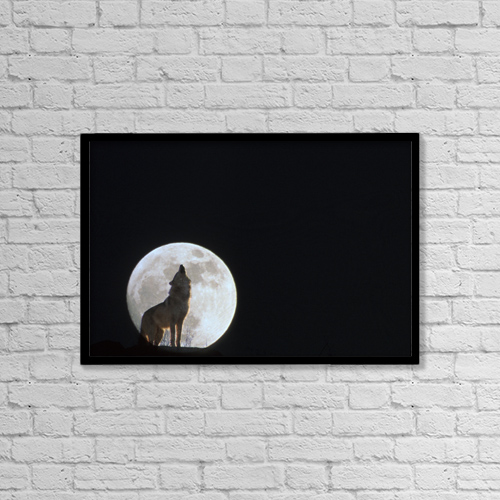 "Printscapes Wall Art: 18"" x 12"" Canvas Print With Black Frame - Wolf Howling At Full Moon/Ncaptive. Composite by John Warden"