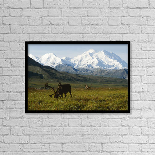 "Printscapes Wall Art: 18"" x 12"" Canvas Print With Black Frame - Two Caribou Feeding On Tundra With Mt by Doug Lindstrand"