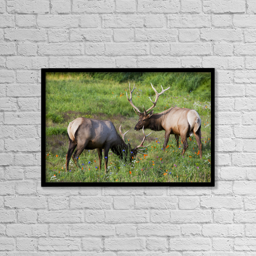 "Printscapes Wall Art: 18"" x 12"" Canvas Print With Black Frame - Animals by Doug Lindstrand"
