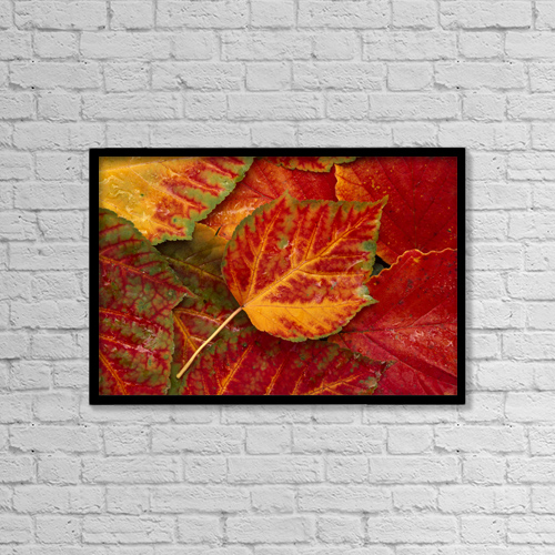 "Printscapes Wall Art: 18"" x 12"" Canvas Print With Black Frame - Stripebark Maple Leaf Fall Close-Up by John Warden"